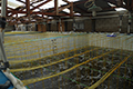 Artificial Feed to Improve Biosecurity in Hatchery