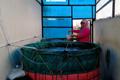 Jadermawan Sinaga: Nila RAS ala Ibu Rumahan