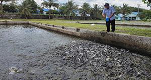 Gaungkan Budidaya Ikan Mandiri