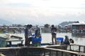 Nila Lampung Terus Prospektif