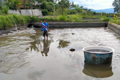 Penuhi Pasar Lokal Benih Nila