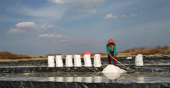 PPGI: Pemerintah tidak Pernah Serius Membangun Kedaulatan Garam Nasional