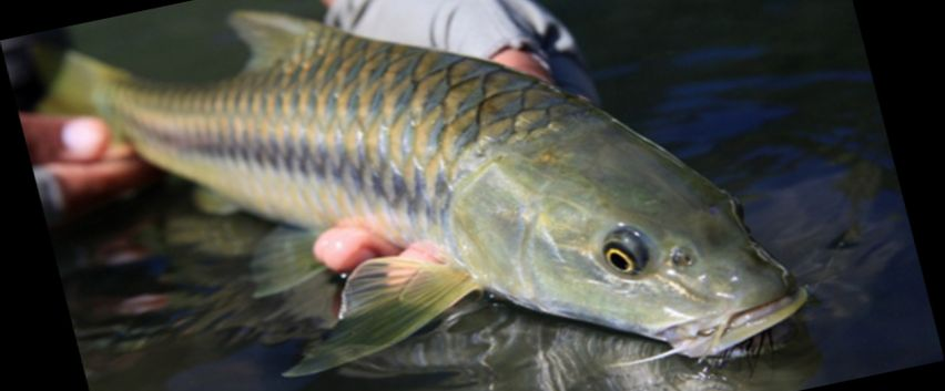 Rintisan Kampung Ikan Dewa di Sumedang