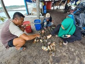 Laju Budidaya Kepiting Bakau di Konawe Utara