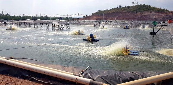 Membedah Manajemen Air Flow Through System pada Tambak Udang