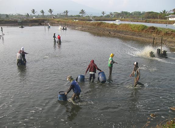 Penyakit Gegarkan Pesisir Barat Sumatera