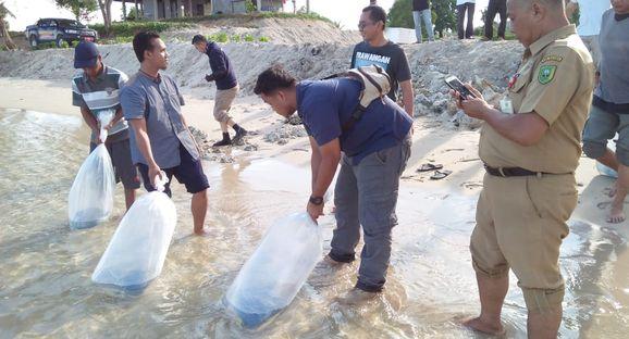 Restocking Bandeng dan Rajungan di Natuna