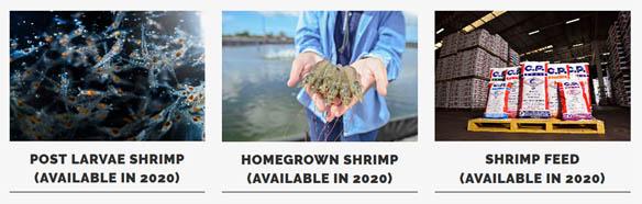Homegrown Shrimp, Anak Perusahaan CPF di Florida Berproduksi Tahun Depan