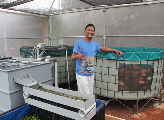 Nila sebagai Komoditas Urban Farming