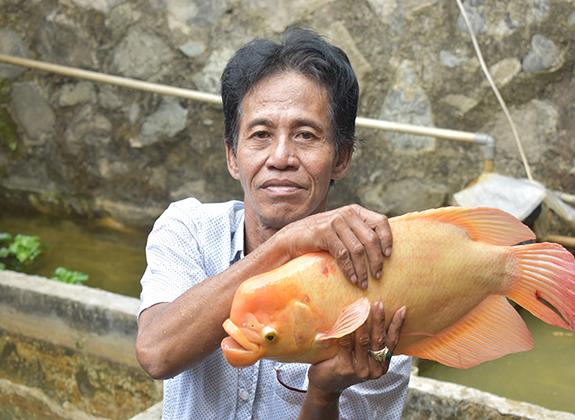 Ceruk Bisnis Gurame Padang Hobi Trobos Aqua Com