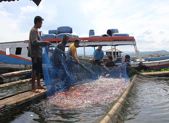 Stimulasi Pasar Nila Domestik